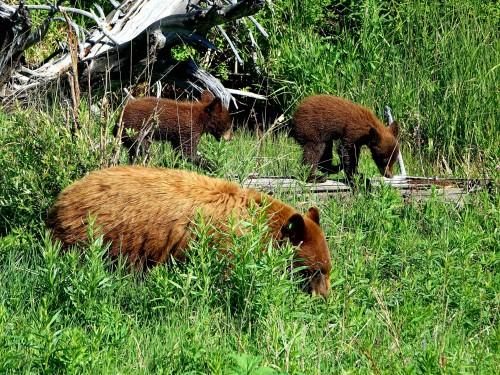 Deux petits oursons et leur maman - copie