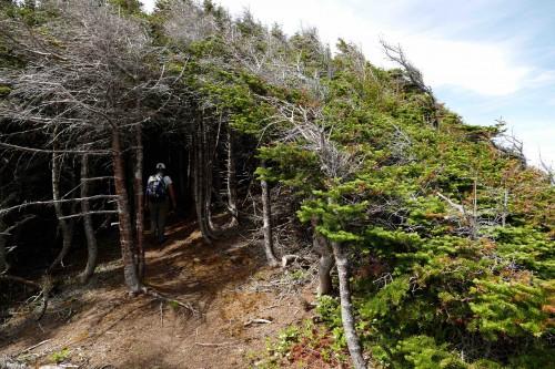 Coastal Trails et un tunnel dans la végétation dense.