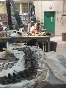 Des scientifiques travaillent sur place à la restauration des fossiles.