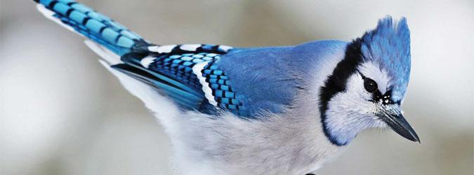 OiseauxAccueil